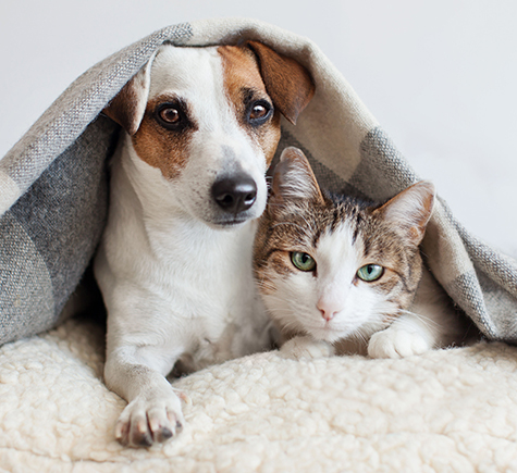 Dog and Cat Under Blanket copy