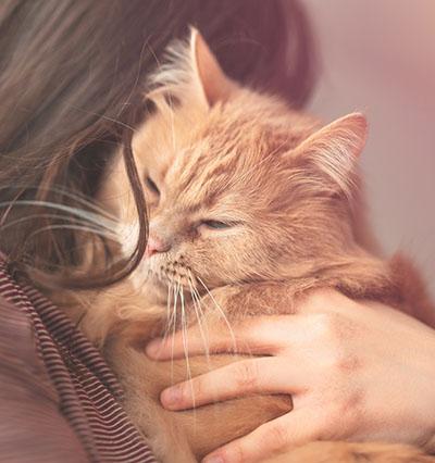 orange tabby cat on owner's shoulder